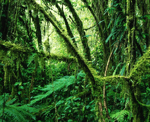 Picture of a rainforest.