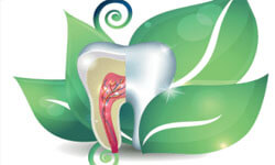 Illustration of a tooth wrapped in a green leaf illustrating holistic dentistry.